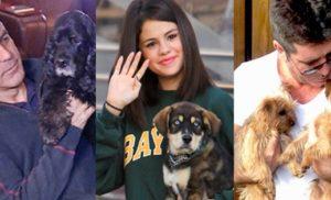 Celebrities & their beloved dogs
