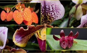 ecuador orchids