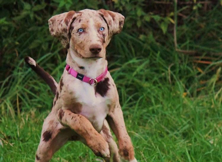 Unique Dog Breeds