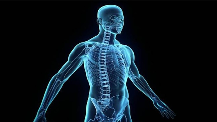 Amazing Facts About the Human Body