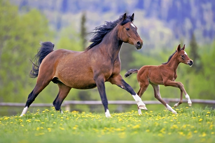 Facts About Horse
