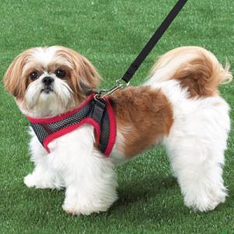 Facts About Shih Tzu